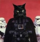 darth-cat-vader-cropped