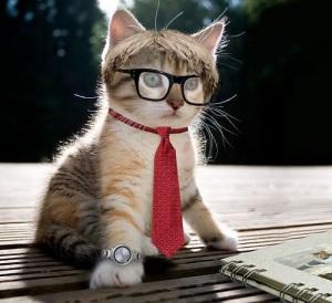 Geek-Kitten